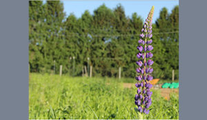 Wildflower Blessings