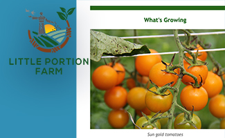 Latest News from Little Portion Farm